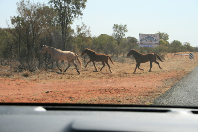 brumbies outback northern territory
