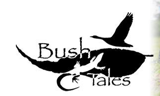 Bush Tales, Darwin Science Week 2017, Wildlife Workshop, environment
