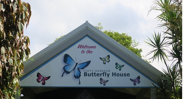 butterfly, flutterby, moth, butterfly house, caterpillar, may cross