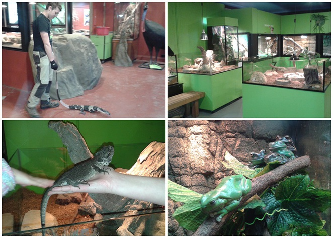 canberra reptile zoo, gold creek village, ACT, canberra, families, kids, activities, things to do,