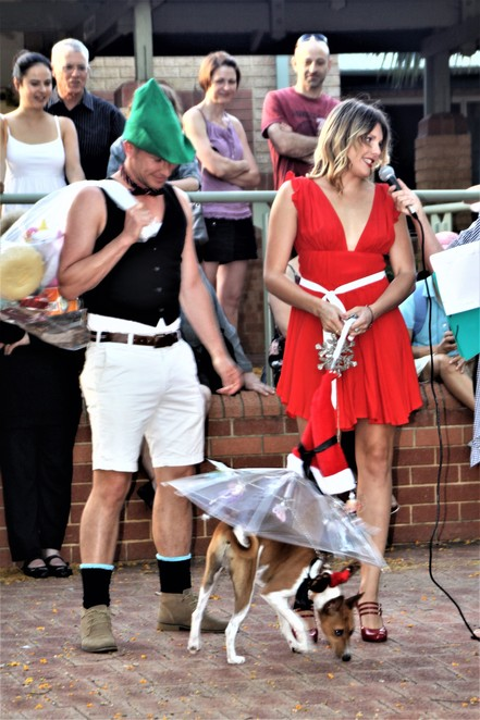 Dogz in the Wood, dogs, dog show, family, markets, Inglewood on Beaufort Monday night markets