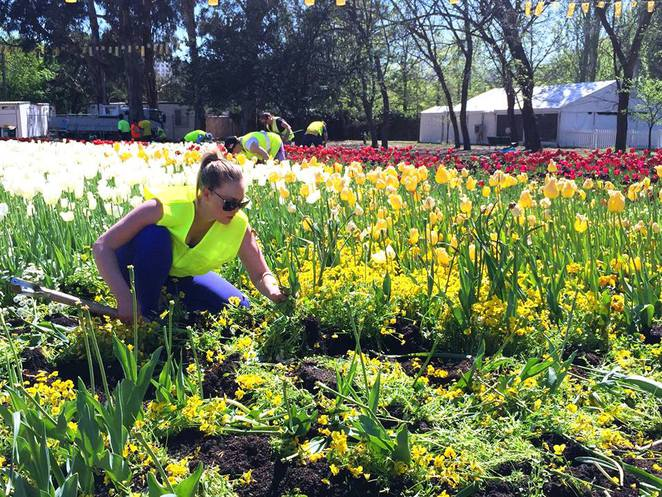 floriade 2016, canberra, ACT, events, september, 2016, floral displays,