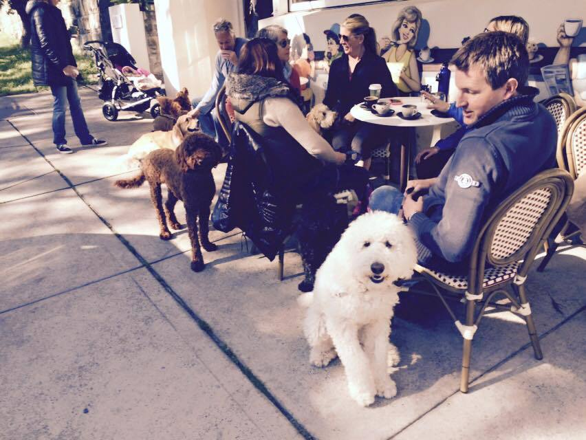 Dog Friendly Cafes Bondi