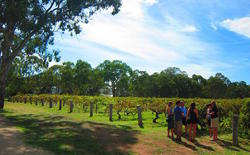 Things To Do In Mclaren Vale Adelaide Weekendnotes Page 4
