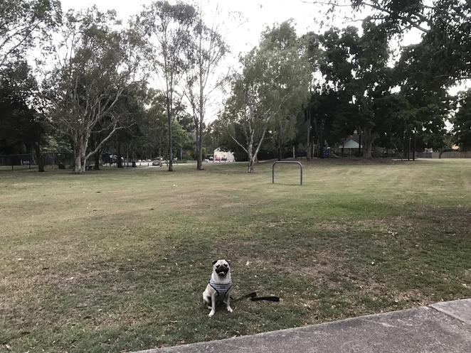 pat rafter park, carseldine roadhouse, dog park, off leash dog park, park, playground, barbecue, free, dog friendly, carseldine, northside, northern suburbs, brisbane, gympie road, picnic