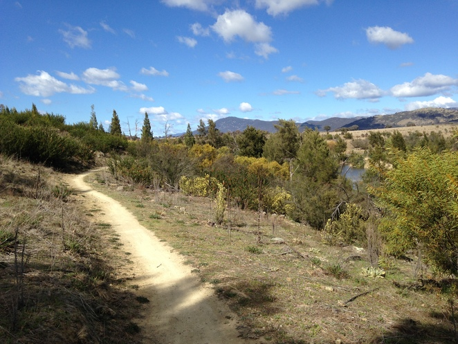 pine island, point hut crassing, walk, murrumbidgee river, ACT, short walks in canberra,