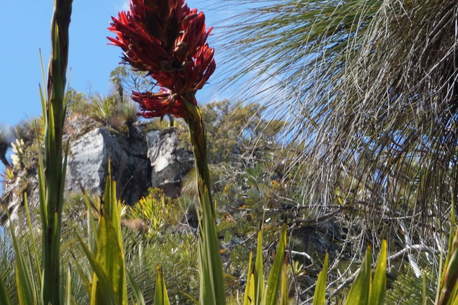 Rocks and Lillies