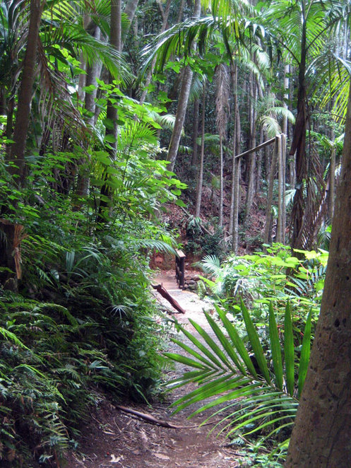 The Sandy Creek Track at The Knoll on Mt Tamborine
