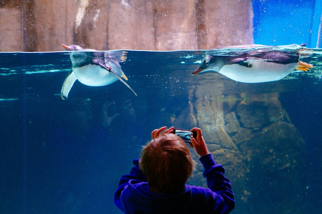 Things To Do In Melbourne With Kids Melbourne