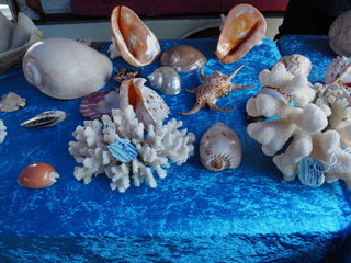 sea shells, manly markets, stalls