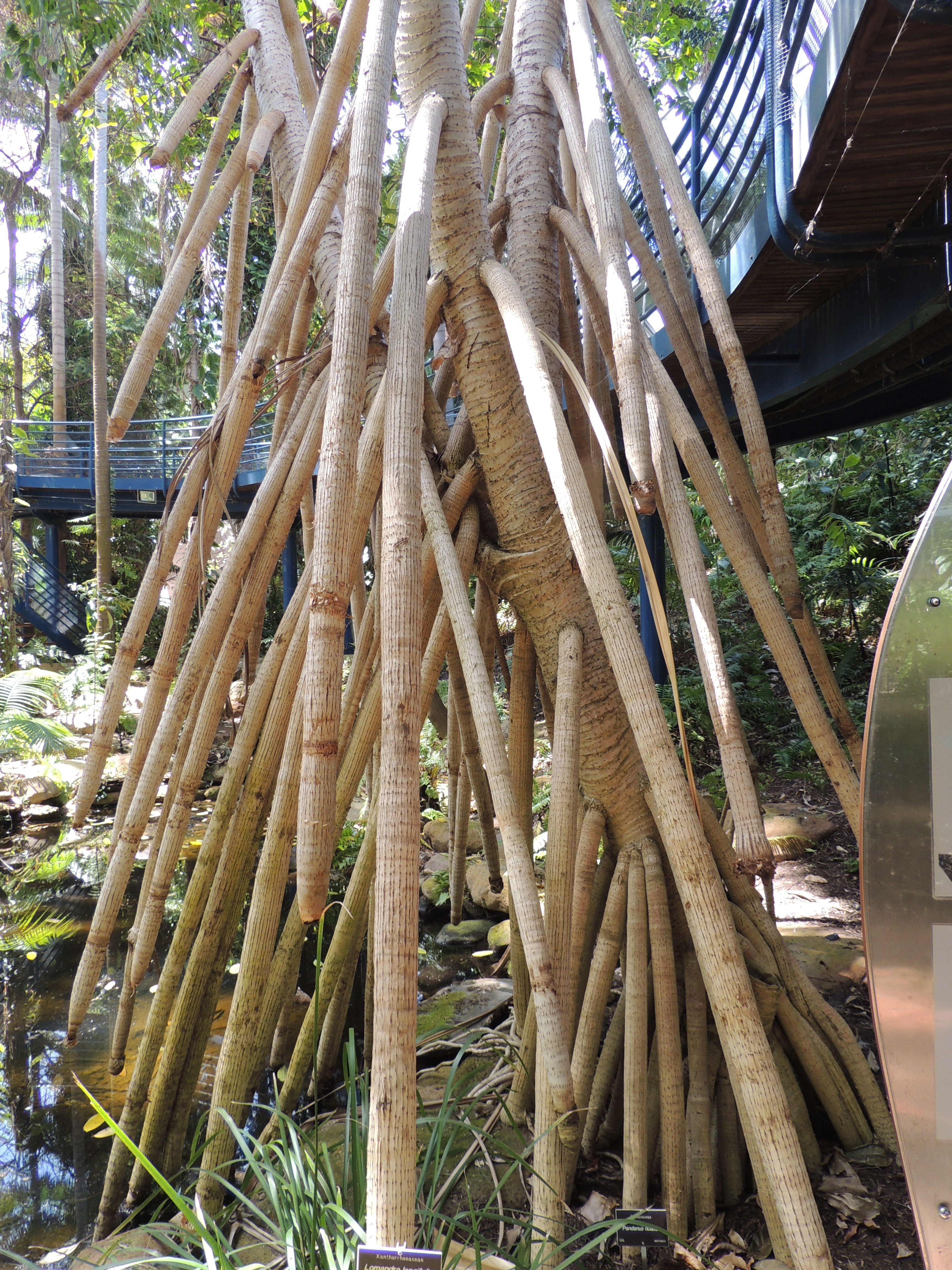 Adelaide\'s Bicentennial Conservatory - South Australia