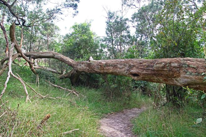 tree over path.