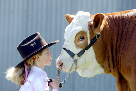 This image is from the Warrnambool Show website.