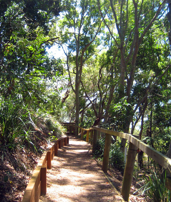 The beautiful boardwalk above the mangroves at Wellington Point