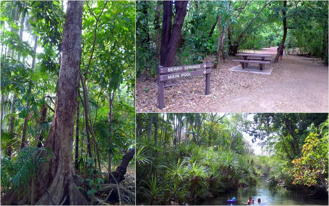 Berry Springs Nature Park, Darwin Natural Attractions, Northern Territory Natural Springs, Swimming Pools in Darwin