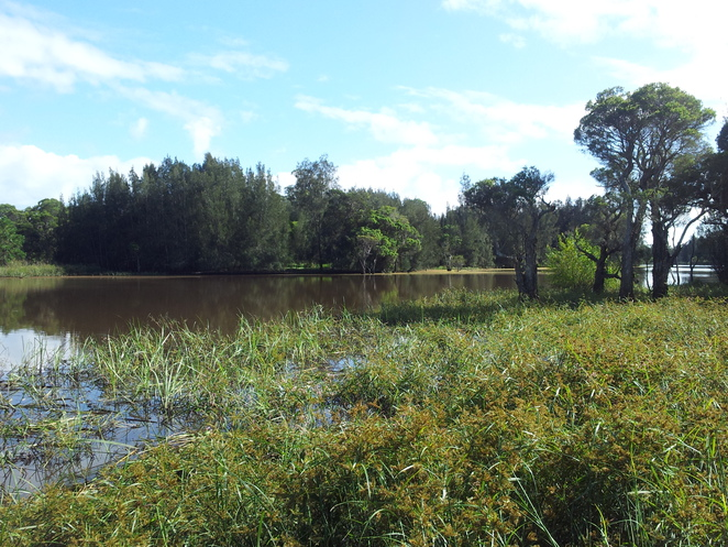 best wetlands in Sydney, wetland habitat sydney, wetland walks sydney, nature, environment sydney, nature walks