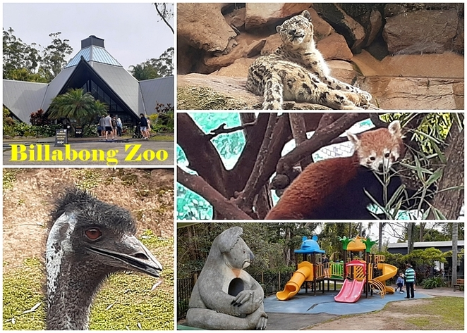 billabong zoo, port macquarie, NSW, australia, zoo, kids, children, family, tourist attractions, family, things to do,