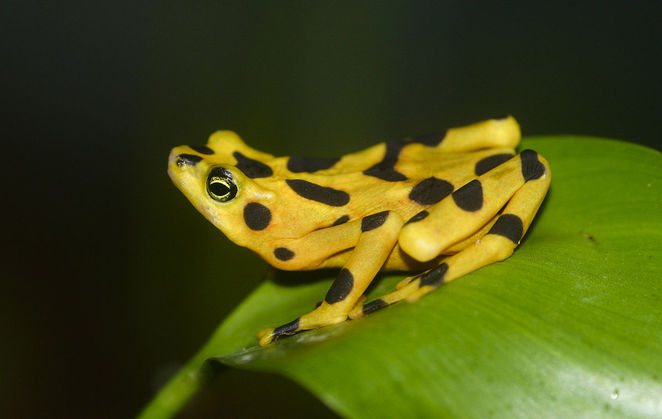 Citizen Science, event, Adelaide, Adelaide Hills, science, Science Week, fungi, frogs, panamanian golden frog