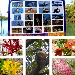 fauna greenbushes wa birds plants