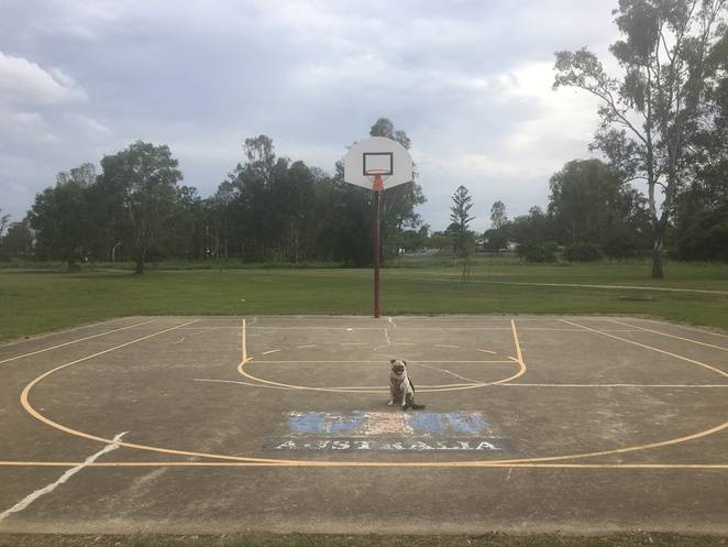 fauna parade park, rocklea, western suburbs, brisbane, dog park, dog friendly, park, playground, barbecue, picnic, free, walking track, cycling track, bike track, kookaburra park, childrens playground