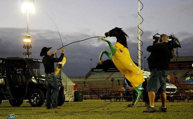 Horse,shows