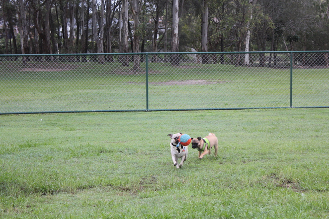 robina common, off leash dog park, dog park, robina, gold coast, brisbane, agility, free, walking track, playground, park, picnic, lake, view, free, outdoors