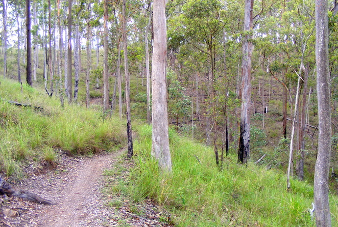 You can avoid the road by walking a short distance along the Bandicoot mountain biking track