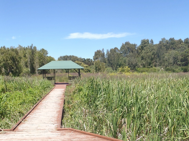 wetlands, pathway, grassy areas, explore