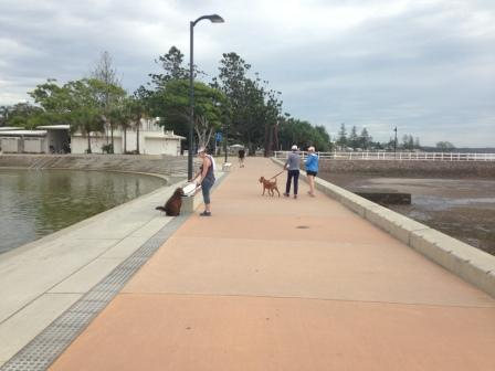 Brisbane dog-friendly walks, Wynnum dog walk, Brisbane dog-friendly cafe, easy dog walks