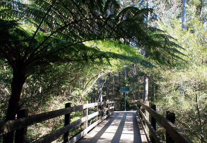 Chermside Hills Reserve has grass trees, eucalyptus bushland and a little pocket of rainforest