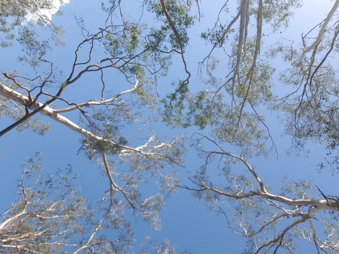 Crows Nest, National Park, Darling Downs, walking tracks, waterfall, wildlife, nature