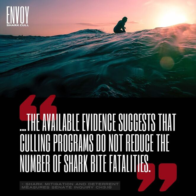 envoy shark cull documentary review, community event, fun things to do, cinema, documentary about sharks, narrated by eric bana, environmental, entertainment, performing arts, the natural world, shark nets in queensland, shark nets in new south wales, save the sharks