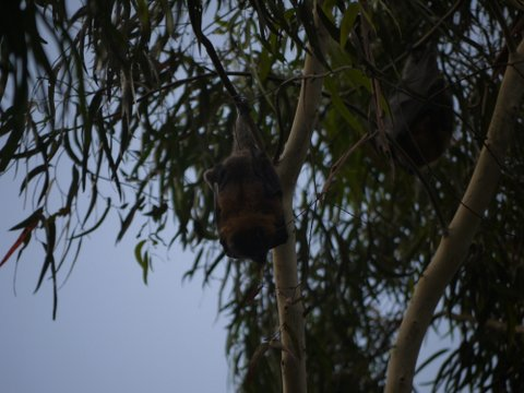 flying fox bell bird park yarra bend bush flora fauna native kids children explore experiential learning