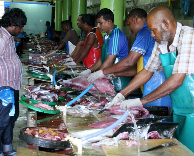 maldives fishmarket