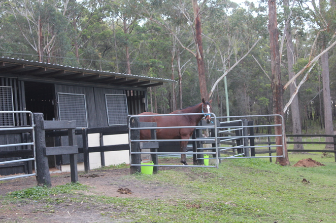 neds bed dog and horse motel, nambucca heads, clybucca, new south wales, mid coast new south wales, sydney, brisbane, dog friendly, accommodation, unit, hotel, motel, stables, travel, holiday, weekend