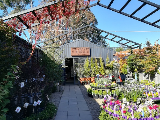 the garden, dickson, canberra, plant nursery, plants, north canberra, where to buy plants, pots, trees,
