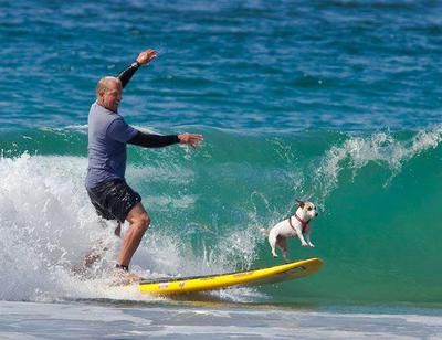 This dog deserves a treat/Image from Noosa Festival Of Surf
