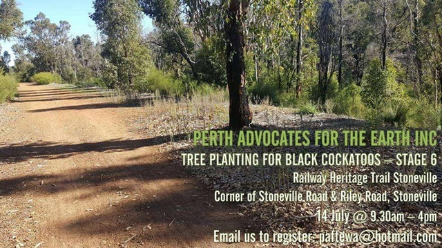 Tree,planting,for,black,cockatoos