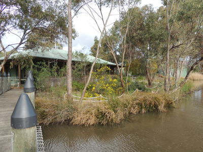 urrbrae wetlands, urrbrae, urrbrae high, wetlands, native plants, water birds