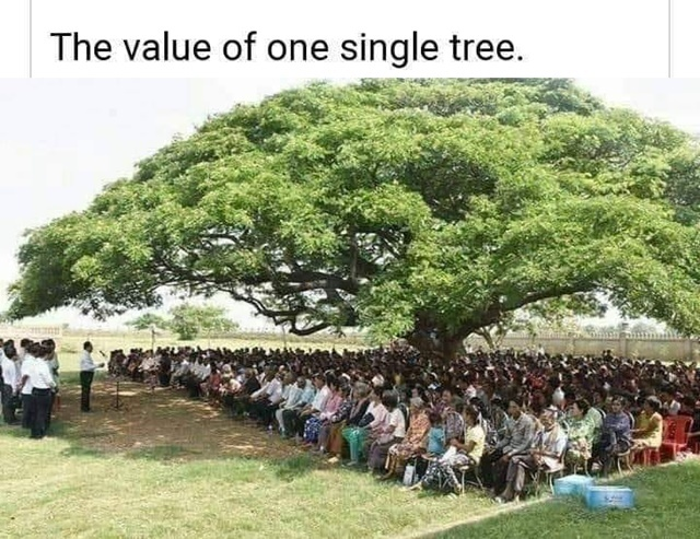 value,of,one,tree
