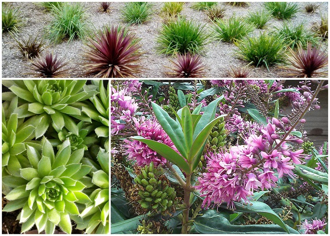cheap plants in canberra, flaxes, succulents, hebes, plant nurseries,
