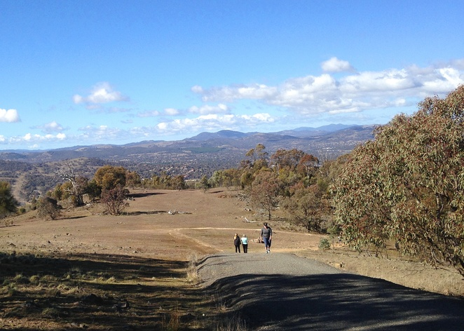 mount taylor, canberra, ACT, walking trails, bushwalks, canberra nature park, walks short walks,