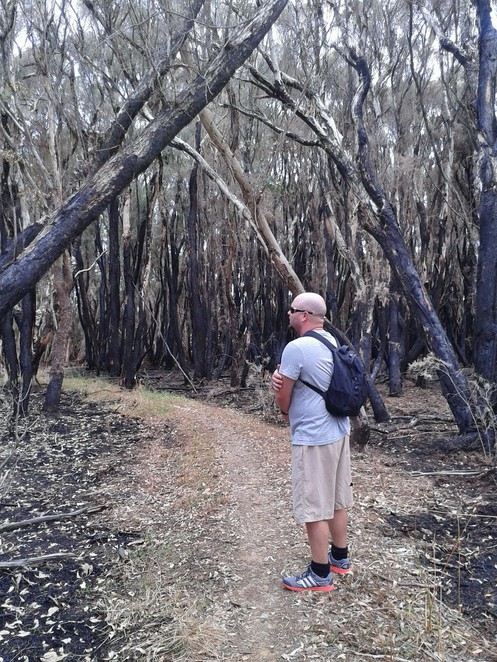 Paperbark Lookout, The Spectacles Wetlands