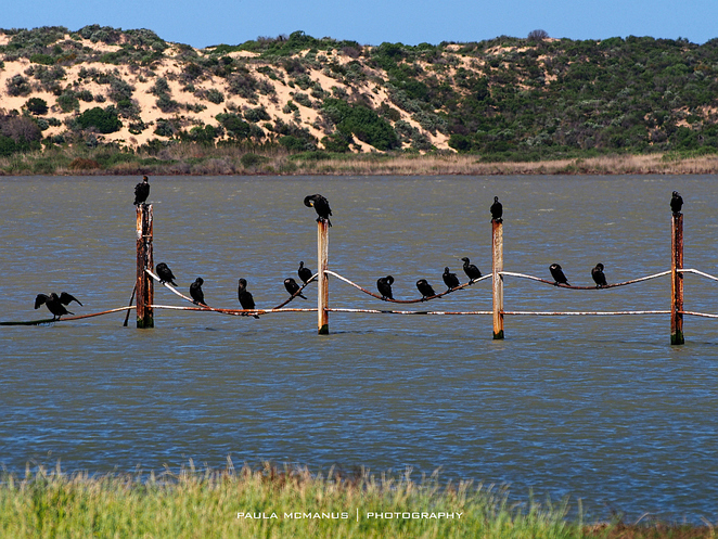 Pelican Point Coorong