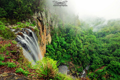 Purling Brook, waterfall, Springbrook, national park, Gold Coast, Tracie Louise, mountains, travel, tourism,