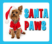 Santa Paws and his Christmas Market at Sunshine Coast Animal Refuge, SCARS, photoshoot, cats and dogs, sizzle crew, bacon and egg burgers, cold drinks, cakes, coffee van, Christmas plants, linen, pet packs, wrapped gifts, cat and doggie knick knacks, only $12 donation for photo, temporary refuge, independent, non-profit, charitable organisation, non-euthanasia policy, vet checked, vaccinated, wormed, desexed, microchipped, medically treated, adoption, take home a new family member, unique photoshoot with Santa Paws