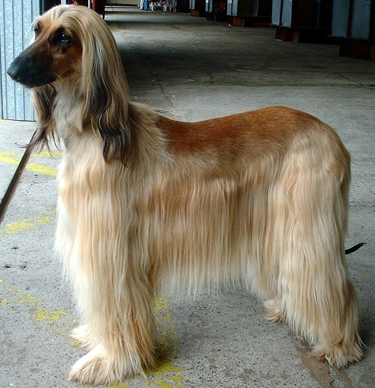 Some,dogs,need,brushing,and,clipping - photo En.wikipedia.org