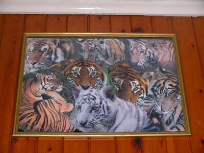 tigers, collage