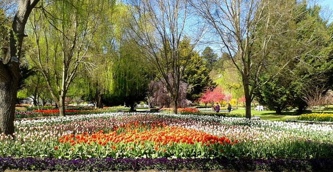 tulip top garden, sutton, federal highway, canberra, NSW, gouburn, floriade, what to see on highway,