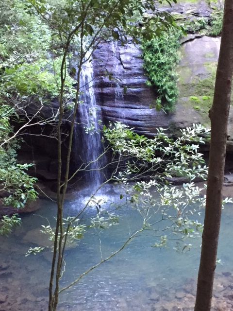 waterfalls, sunshine coast, buderim forest park, tranquillity, serenity, peaceful